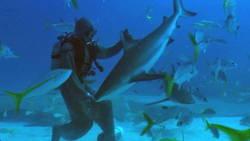 Ce plongeur hypnotise un requin avec sa main, regardez !