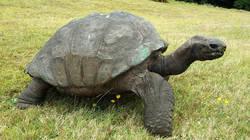 Voici les plus vieux animaux du monde !