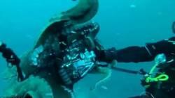 Cette pieuvre géante le contraint à lâcher son appareil photo !