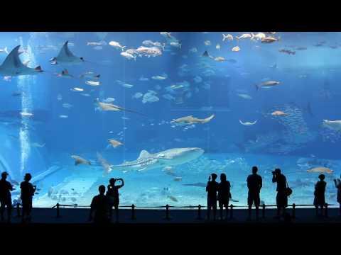 aquario gigantesco