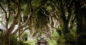 10 forêts plus surprenantes les unes que les autres En savoir plus: http://www.maxisciences.com/for%eat/10-forets-plus-surprenantes-les-unes-que-les-autres_art33282.html Copyright © Gentside Découverte